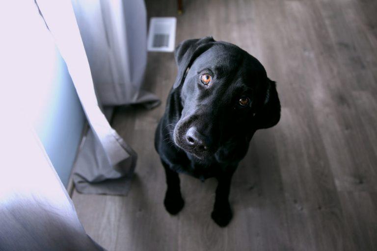 A dobbanó tappancsok lélekmelengető hatása – ezért (is) jó dolog a kutyasétáltatás
