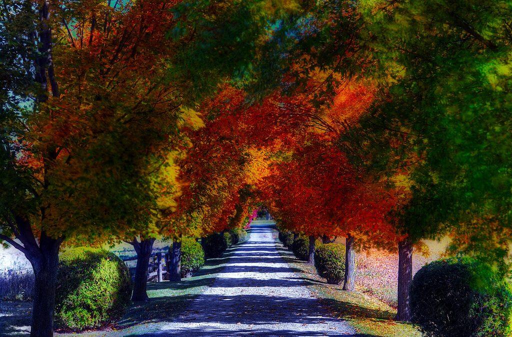 Elmúlás helyett megújulás – 3 vers, ami segít, hogy másképp tekints az őszre