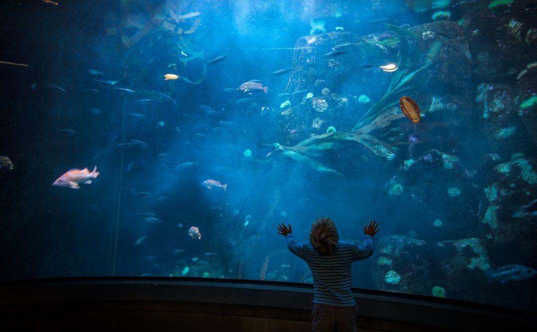 A környezettudatosság menő! Ugye te is elmeséled a gyerekeidnek? – Interjú Ürge-Vorsatz Diana klímakutatóval, az utolsó percekről, a szülői mintáról és a fiatalok erejéről