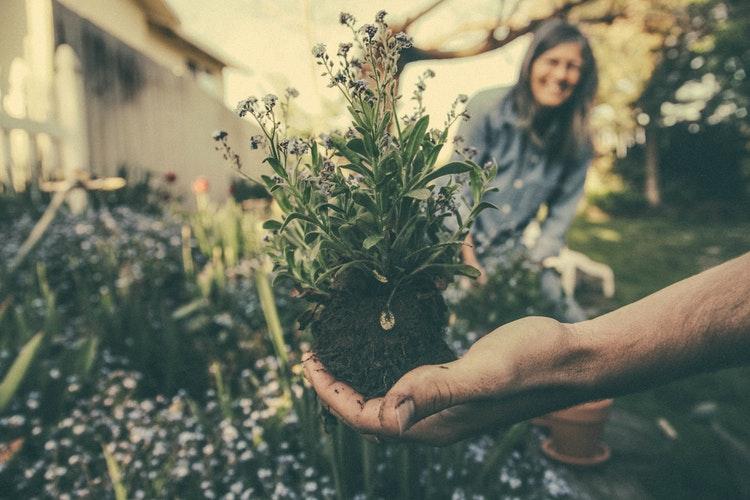 """""""A növények sosem lesznek hálátlanok a gondoskodó figyelemért"""" – A kertészkedés 9 jótékony hatása"""